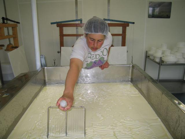 From 1000 pounds of milk, we get about 130 pounds of cheese.