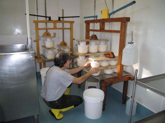Into the Press - The curd is pressed to give it it's wheel shape, and to expel more whey