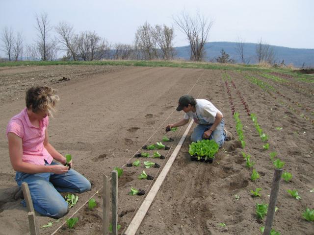 Lettuse Planting - Lauren and Marian plant lettuce.